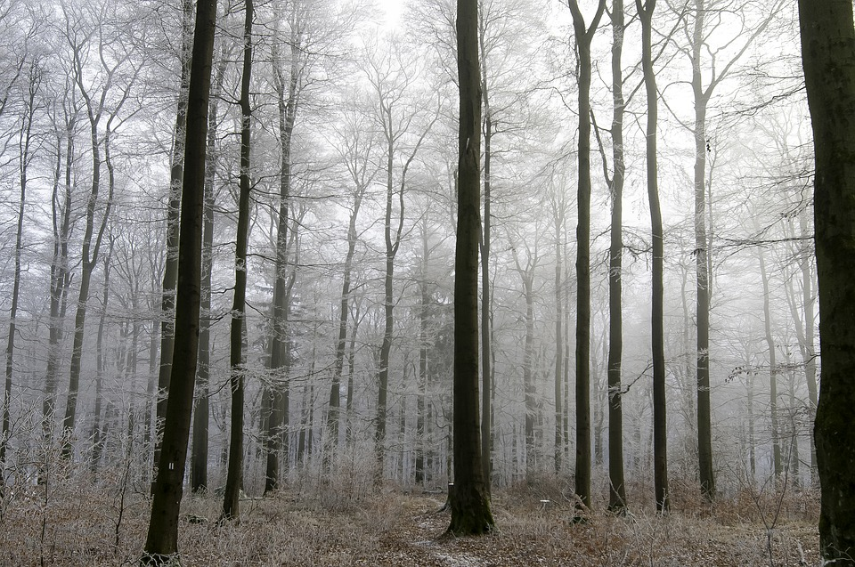 Harmony-Silent-Peaceful-Grey-Trees-Frost-Sky-1960200